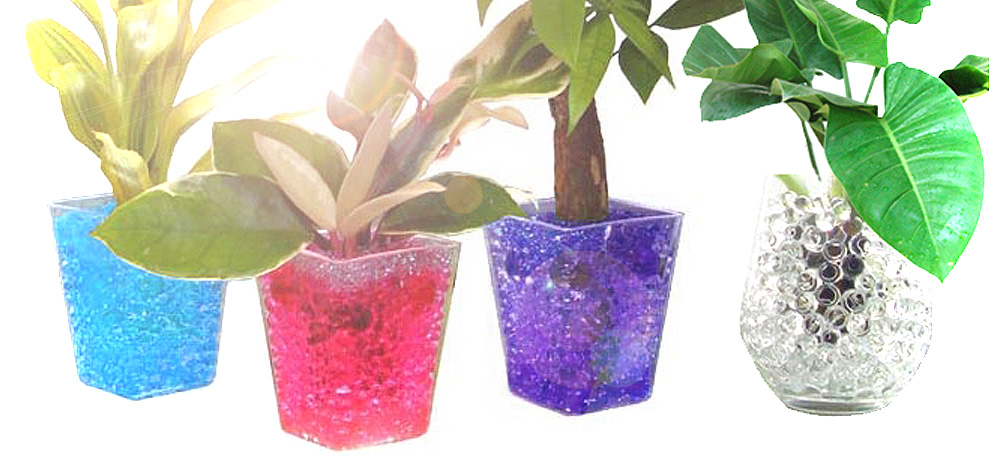 What Type Of Plants Grow In Water Beads Water Beads Australia